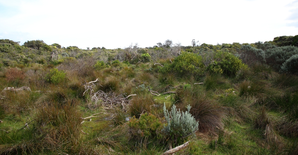 This image has an empty alt attribute; its file name is bunurong-coastal-reserve-scrub-looking-west-from-se-the-cape-1-sep-20.jpg