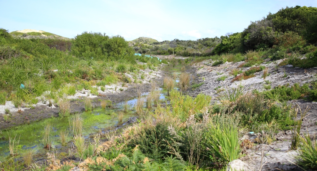 This image has an empty alt attribute; its file name is replanted-drainageline-into-natural-wetland-se-exit-looking-south-the-cape-1-sep-20.jpg