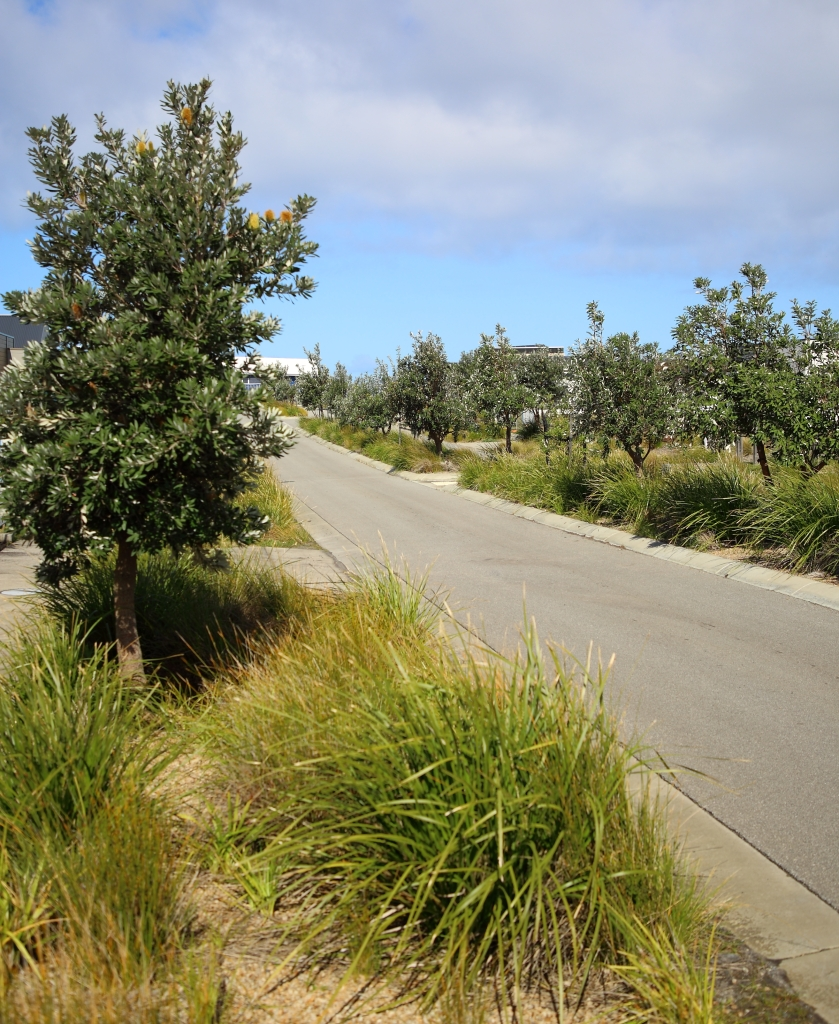 This image has an empty alt attribute; its file name is street-plantings-and-swales-the-cape-5-sep-20.jpg