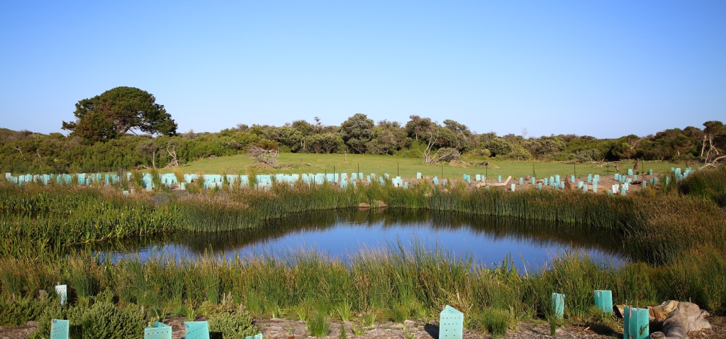 This image has an empty alt attribute; its file name is sw-wetland-the-cape-6-sep-20.jpg