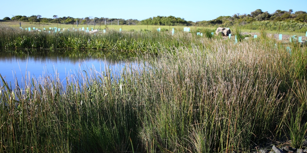 This image has an empty alt attribute; its file name is sw-wetland_6-the-cape-6-sep-20.jpg